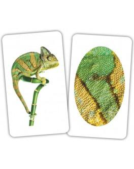 Карточки Домана Животное и фрагмент Вундеркинд с пеленок