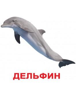 Карточки Домана Обитатели воды русский язык Вундеркинд с пеленок - WK 2100064095528