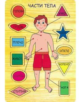 Деревянная игрушка рамка-вкладыш Части тела, Мди - Der p39