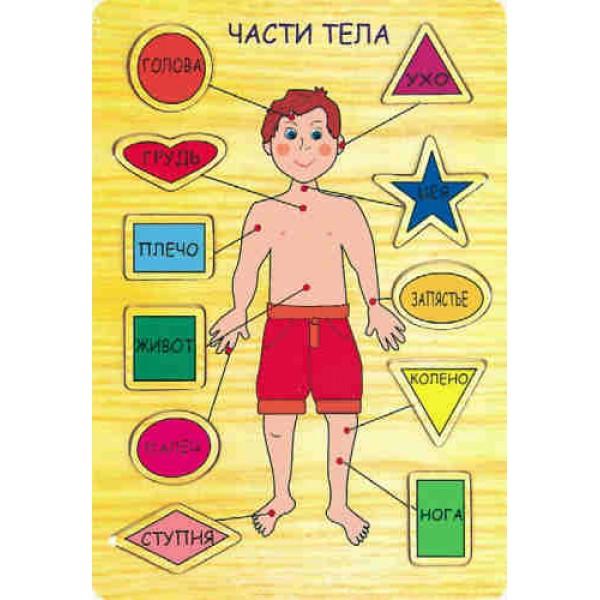 рамка вкладыш части тела Мир деревянных игрушек p39