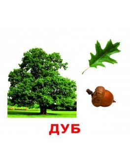 Карточки Домана Деревья русский язык Вундеркинд с пелёнок - WK 2100064096341