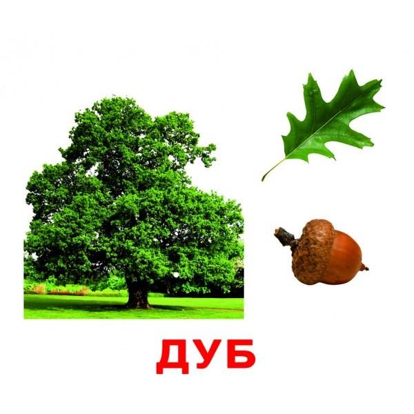 карточки домана деревья, Вундеркинд с пелёнок