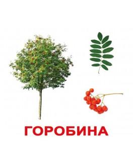 Карточки Домана Деревья укр. язык Вундеркинд с пеленок - WK 2100064097034