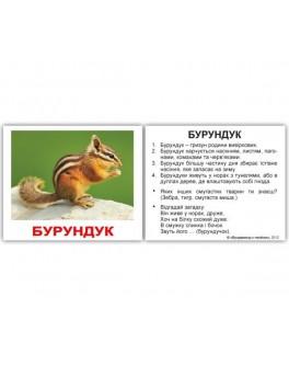 Карточки Домана мини Дикие животные укр. язык Вундеркинд с пеленок - WK 2100064095719