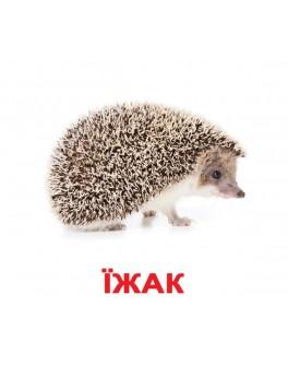 Карточки Домана Дикие животные укр. язык Вундеркинд с пеленок - WK 2100064095207