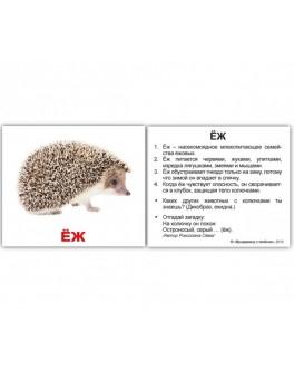 Карточки Домана мини Дикие животные русский язык Вундеркинд с пеленок - WK 2100064095320