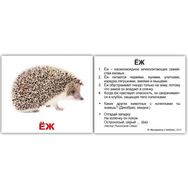 карточки домана дикие животные мини, Вундеркинд с пеленок