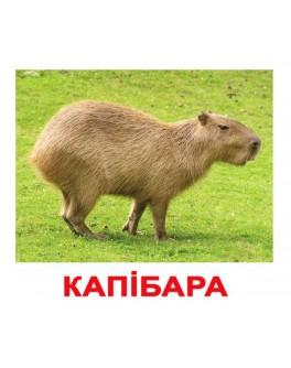 Карточки Домана Экзотические животные укр. язык Вундеркинд с пеленок - WK 2100064096501