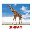 Карточки Домана Дикие животные русский язык Вундеркинд с пелёнок - WK 2100064095061