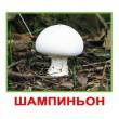 Карточки Домана мини Грибы русский язык Вундеркинд с пеленок - WK 2100064096648