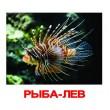 Карточки Домана Обитатели воды русский язык Вундеркинд с пелёнок - WK 024