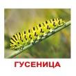 Карточки Домана Насекомые русский язык Вундеркинд с пелёнок - WK 00302100064095269