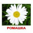 Карточки Домана Цветы русский язык Вундеркинд с пелёнок - WK 2100064095122