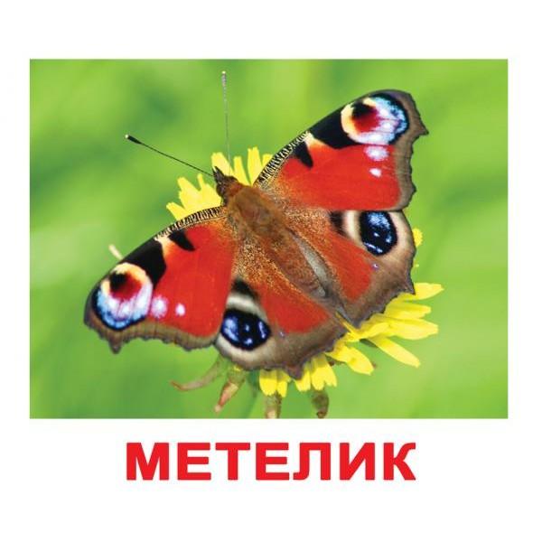 карточки домана комахи, Вундеркинд с пелёнок