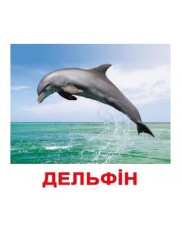 Карточки Домана Мои первые знание укр. язык Вундеркинд с пеленок