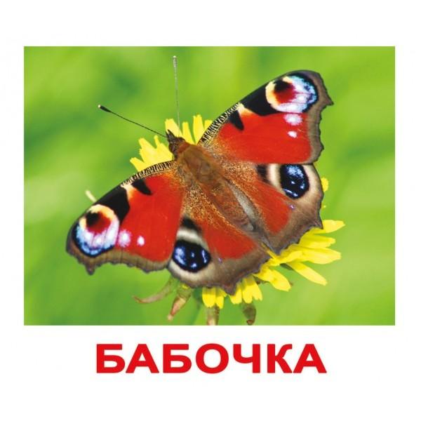 фото Карточки Домана Насекомые русский язык Вундеркинд с пелёнок - WK 00302100064095269