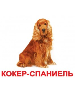 Карточки Домана Породы собак русский язык Вундеркинд с пелёнок - WK 2100064096303