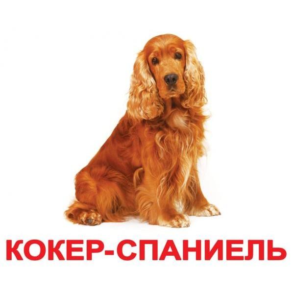 фото Карточки Домана Породы собак русский язык Вундеркинд с пелёнок - WK 2100064096303