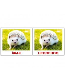 Карточки Домана мини Дикие животные англо-украинские Вундеркинд с пеленок