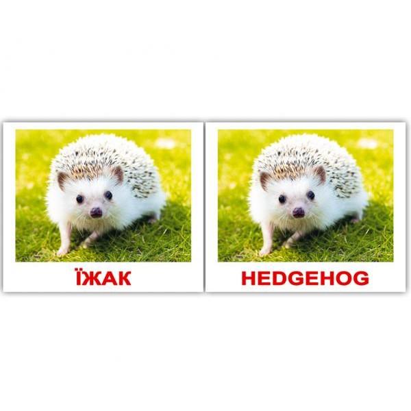 двуязычные карточки домана дикі тварини мини, Вундеркинд с пелёнок