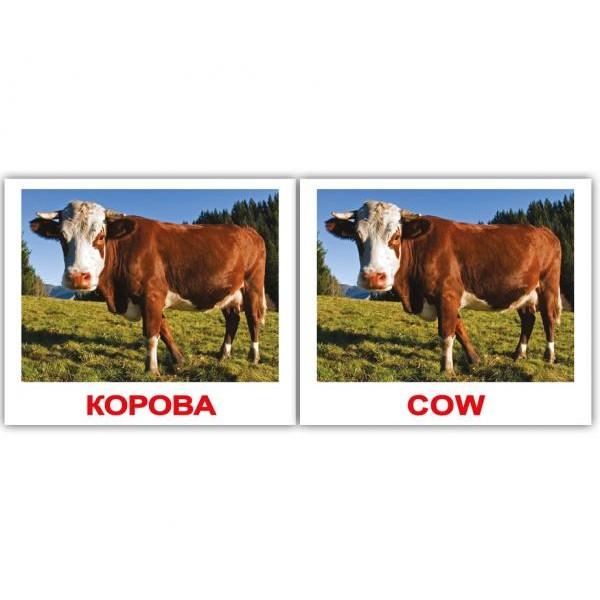 двуязычные карточки домана домашние животные мини, Вундеркинд с пелёнок