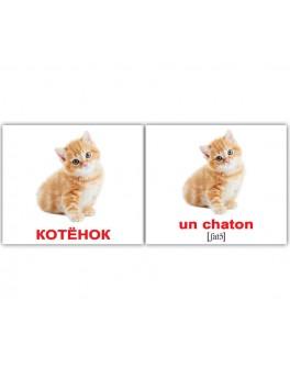Карточки Домана мини Домашние животные французско-русские Вундеркинд с пеленок