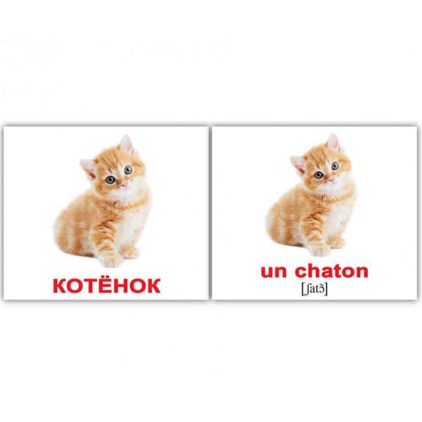 Les animaux domestiques-Домашние животные Французские карточки Домана Мини