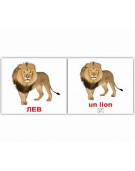 Les animaix sauvages-Дикие животные Французские карточки Домана Мини
