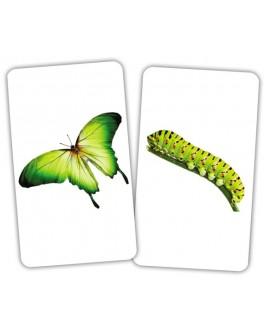 Карточки Домана Парочки Животное и детеныш Вундеркинд с пеленок