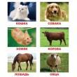 Карточки Домана Лото Животные русский язык Вундеркинд с пелёнок - WK 2100064096143