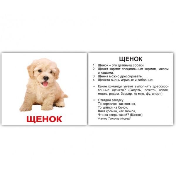 карточки Домана Домашние животные и детёныши мини