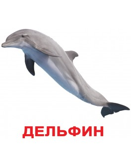 Карточки Домана Обитатели воды русский язык Вундеркинд с пеленок