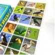 Птахи, розвиваюча гра-суперлото  - eplus M7346346