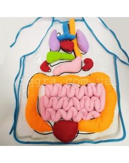 Модель-фартук объемный Внутреннее строение тела человека НУШ - нуш 90525002