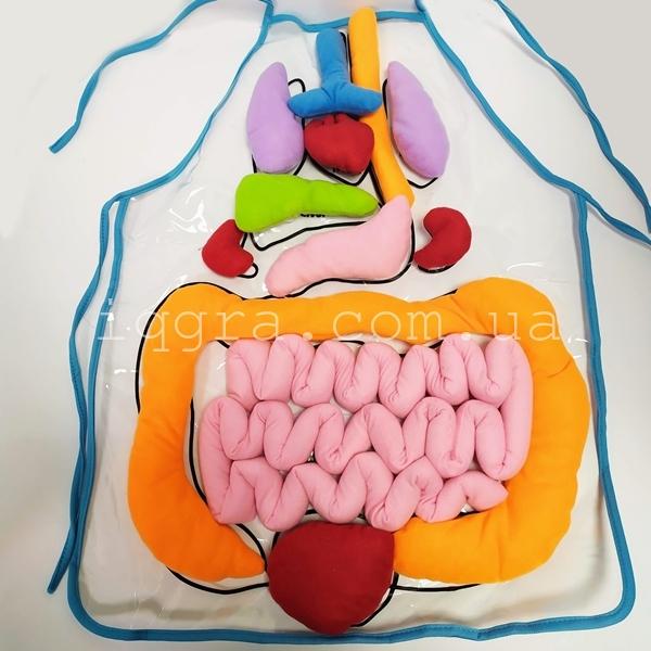 Модель-фартух об'ємний Внутрішня будова тіла людини НУШ - нуш 90525002